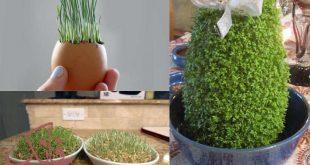 طرز کاشت سبزه